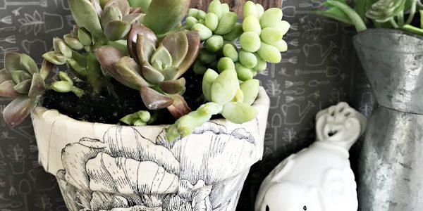 DIY Decoupage Succulent Planter Teacher Gift