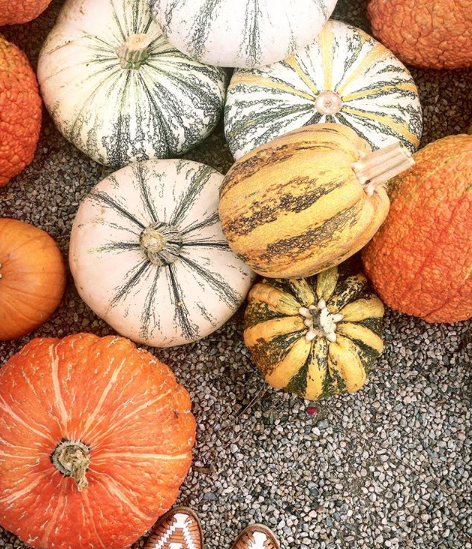 All things pumpkin are part of the Pebbles challenge for October! Hope you'll join us for the party!